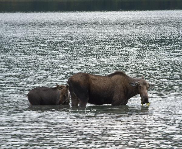 Moose Lake photo by Jennifer Triplett